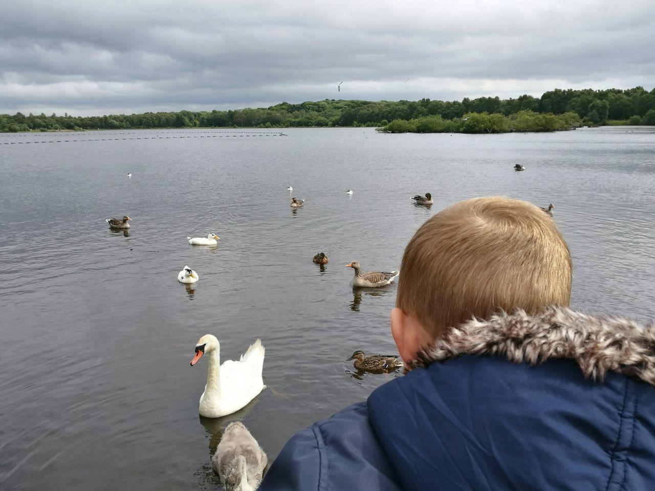 Beautiful stock photos of duck, 2-3 Years, Animal Themes, Animal Wildlife, Animals In The Wild