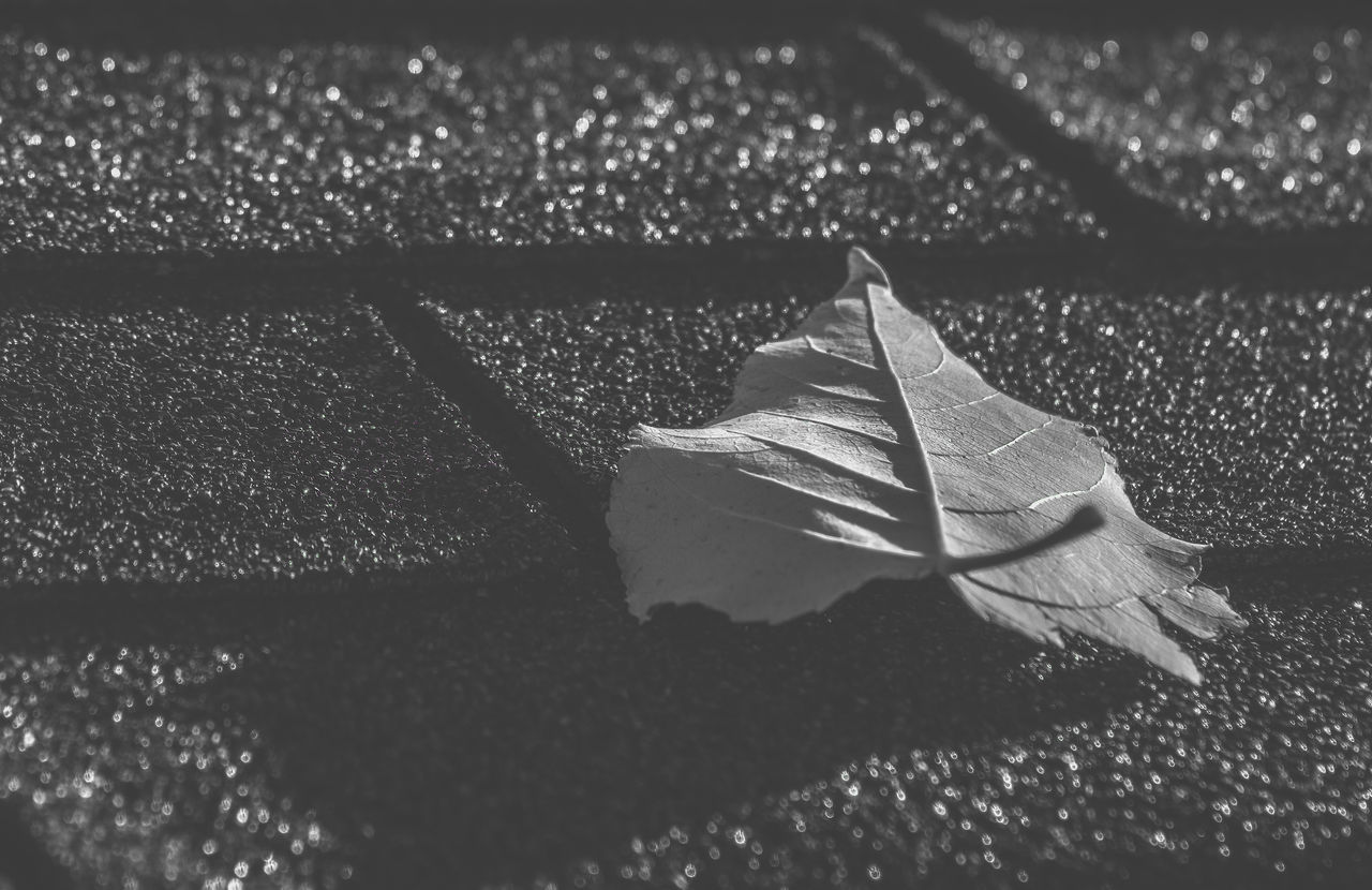 Artsy Autumn Black And White Black And White Photography Close-up Day Fall Beauty Fallen Fallen Leaf Fallen Leaves Fine Art Photography Leaf Leaf Vein Leaves Leaves Only Leaves Nature No People Ontario, Canada Outdoors Pattern Rooftop Shingles The Week On EyeEm