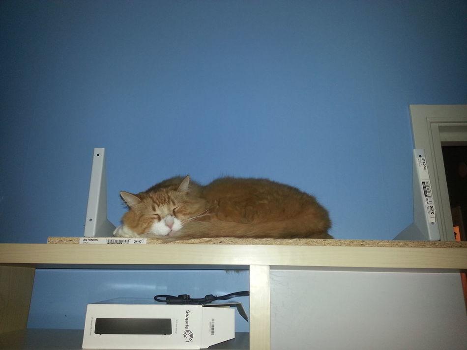 Min stora katt pokemon :-) Sleeping