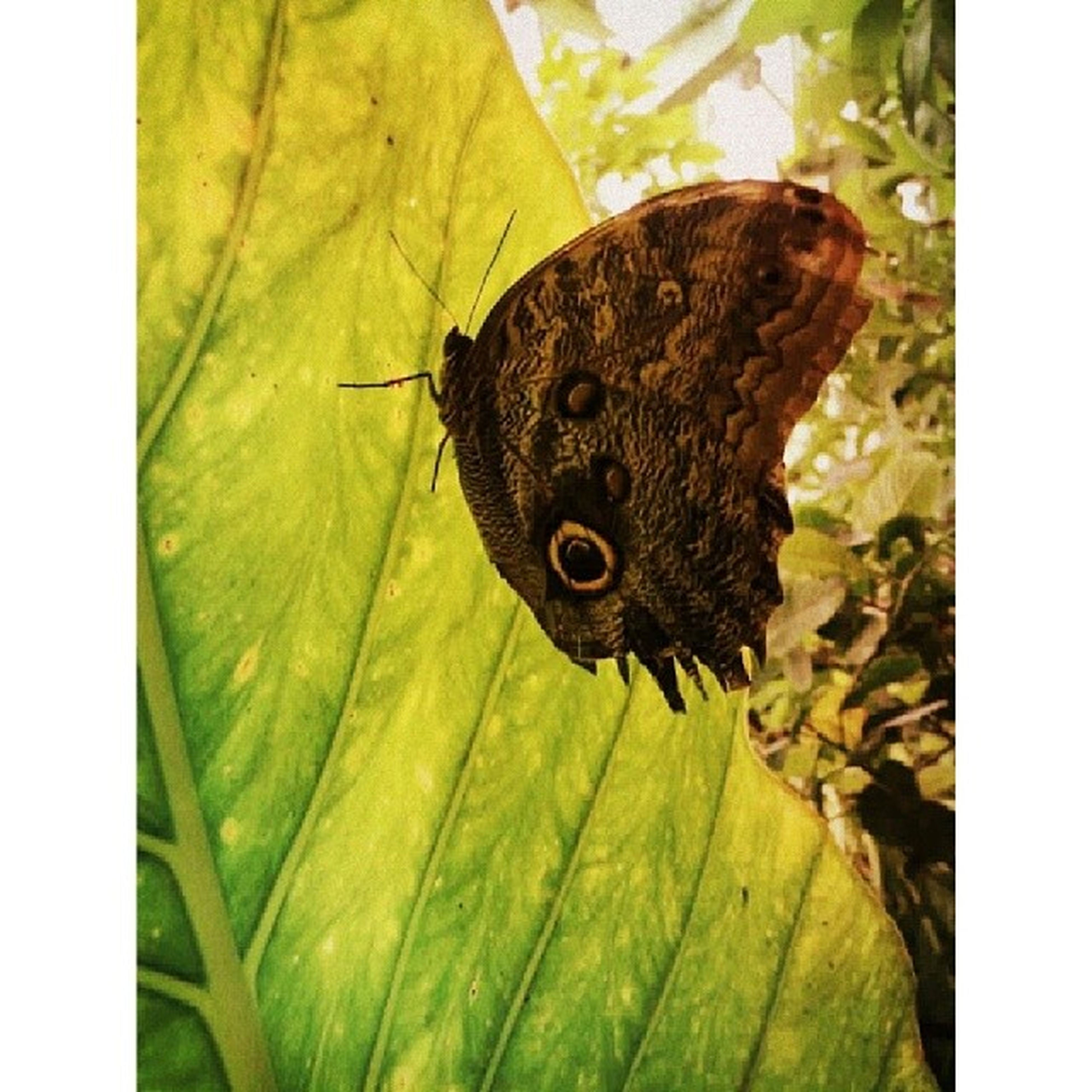 one animal, animal themes, animals in the wild, wildlife, insect, leaf, close-up, butterfly - insect, butterfly, perching, nature, natural pattern, animal antenna, auto post production filter, focus on foreground, transfer print, zoology, beauty in nature, full length, day