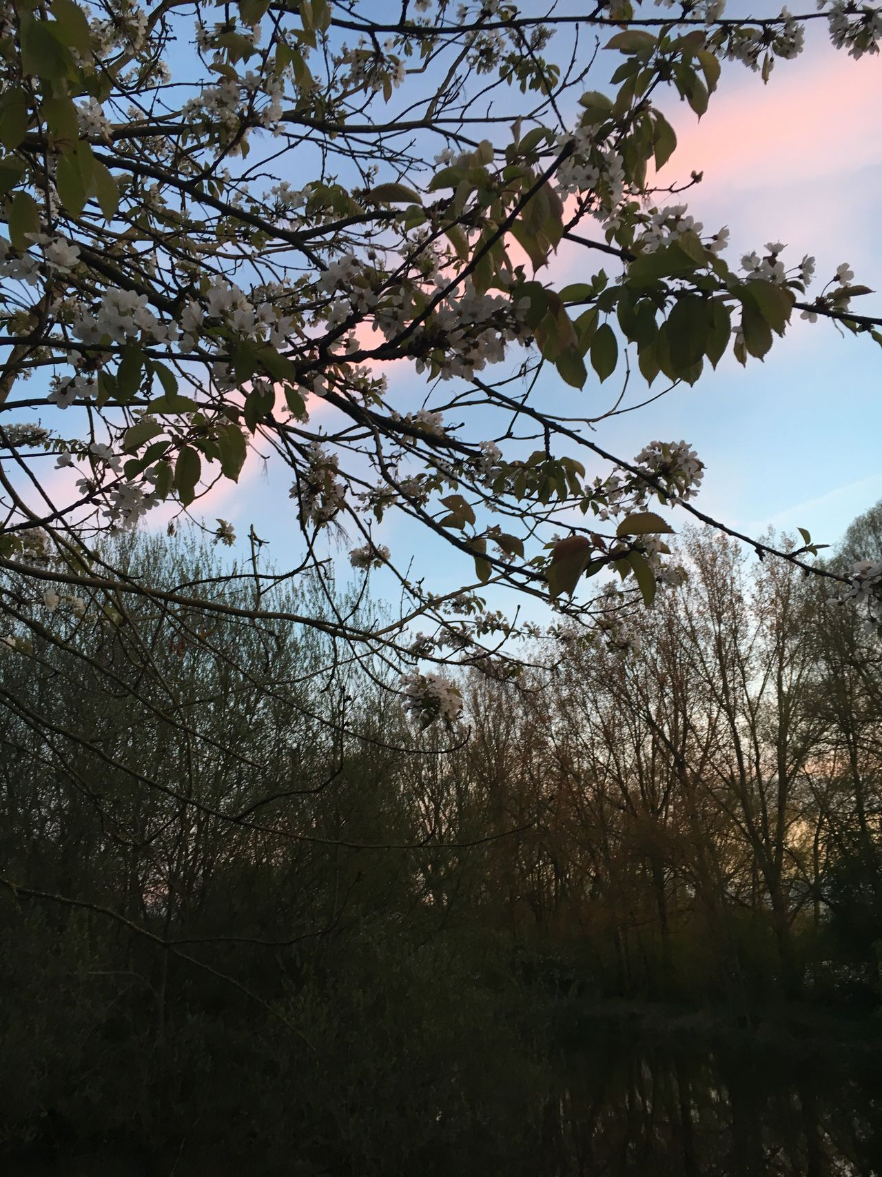 Tree Low Angle View Branch Growth Nature Sky Outdoors No People Beauty In Nature Day Architecture Sunset Clouds