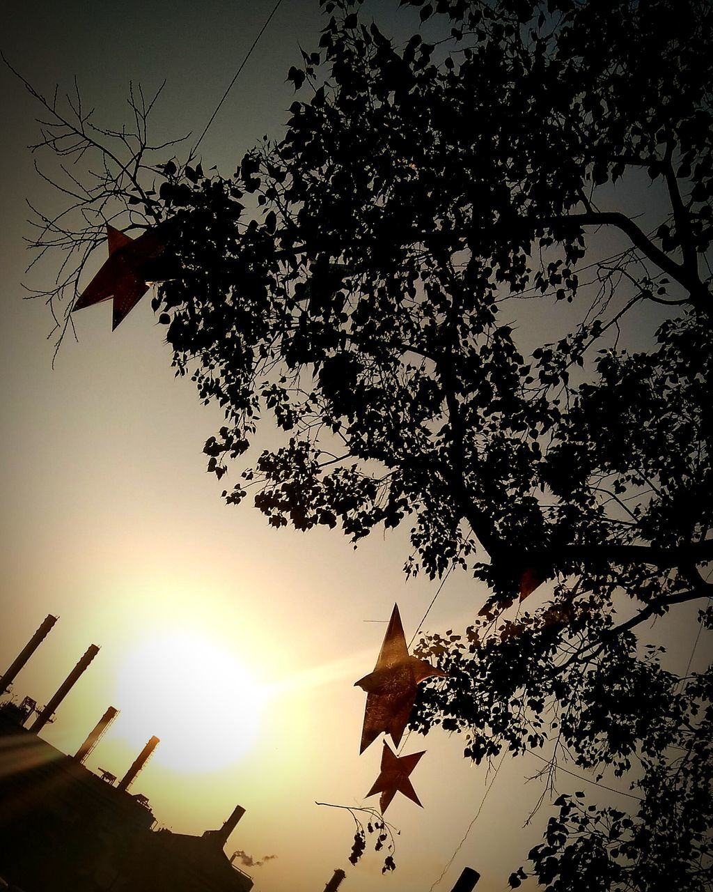 tree, sunset, sun, sky, low angle view, nature, sunlight, silhouette, growth, outdoors, hanging, no people, leaf, flag, beauty in nature, branch, flying, day
