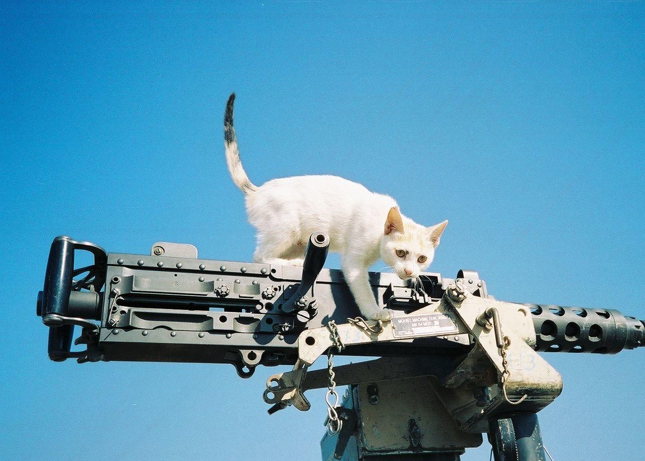 Beautiful stock photos of war,  Animal Themes,  Blue,  Climbing,  Day