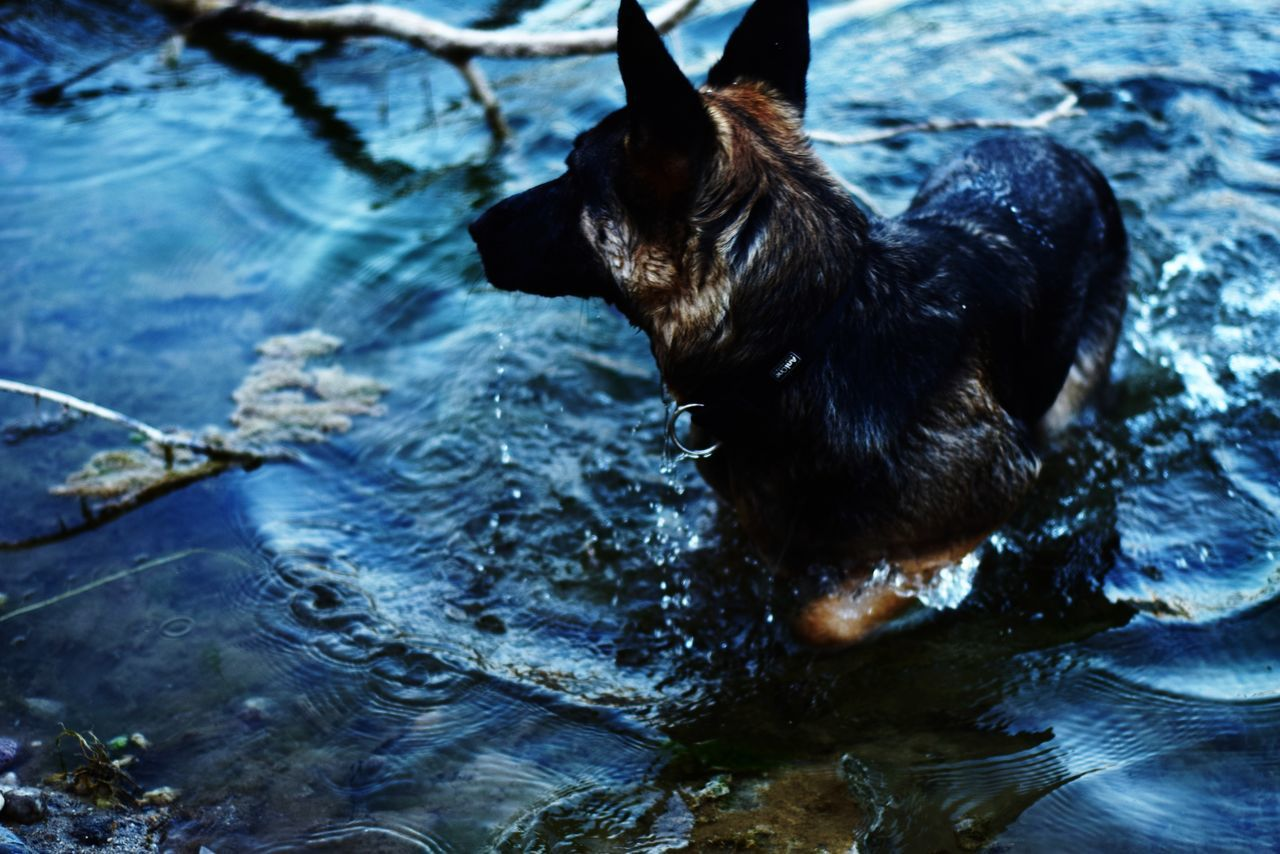 High Angle View Of German Shepherd Taking Bath In Lake
