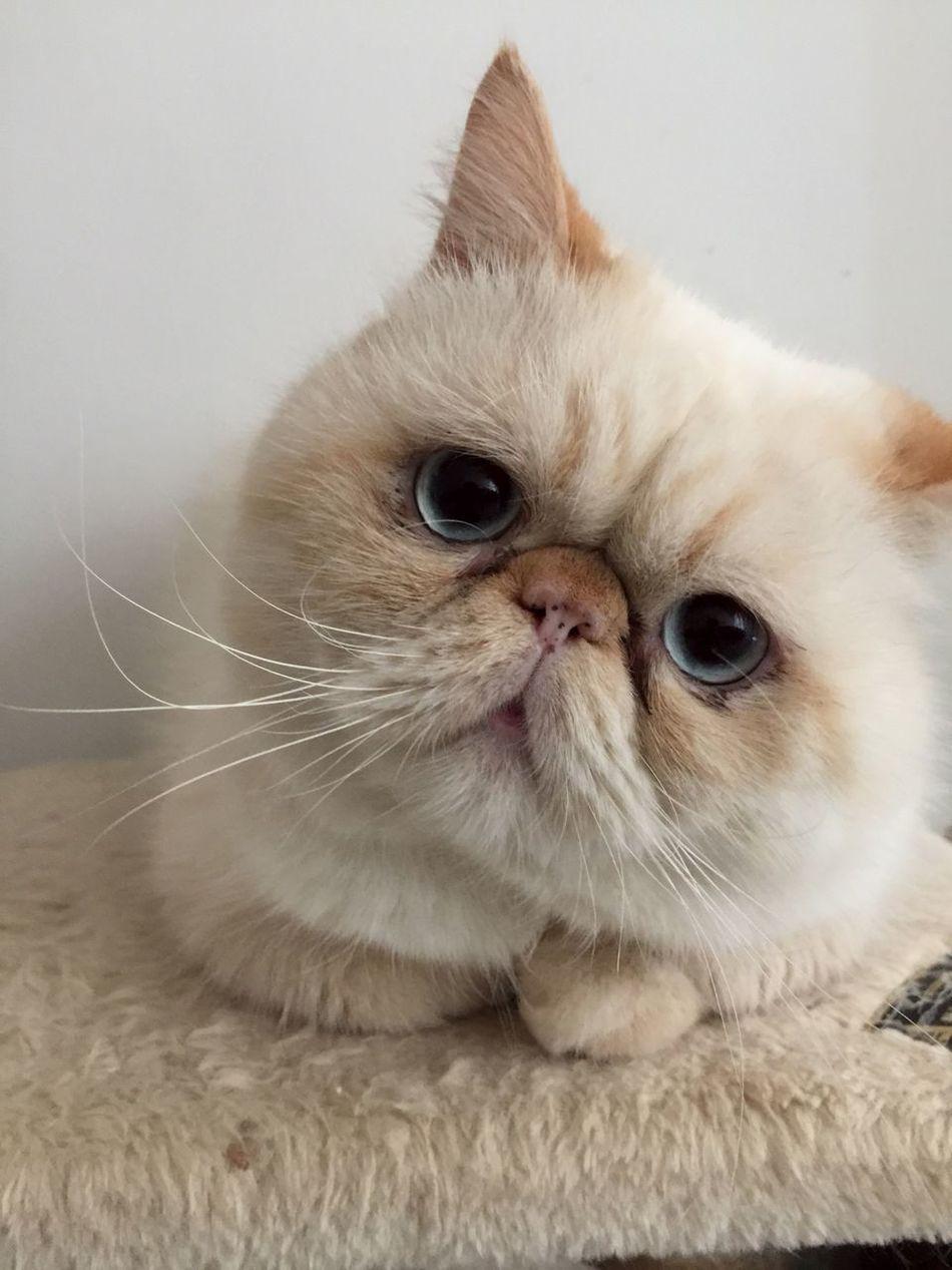 Cat Lovers Cat♡ Cats Catsofinstagram Cat Cute Cats Animals Cute Pets Face Faces Of EyeEm