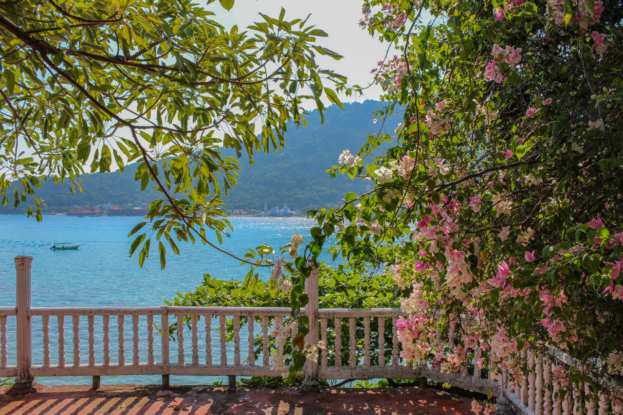 tree, nature, growth, scenics, beauty in nature, day, no people, tranquil scene, sea, outdoors, tranquility, water, sky