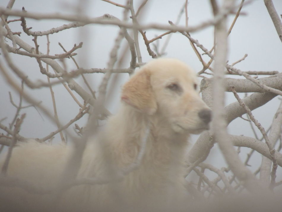 Animal Animal Themes Animals In The Wild Day Dog Intrecci Mammle More Nature Nopeople One Animal Plot