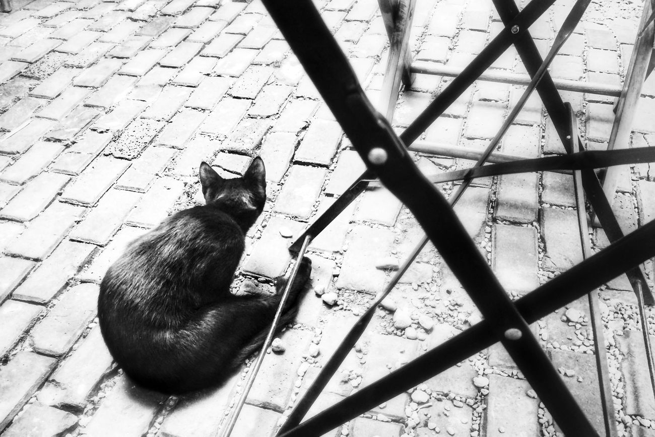 Tomcat Cat Plastilina