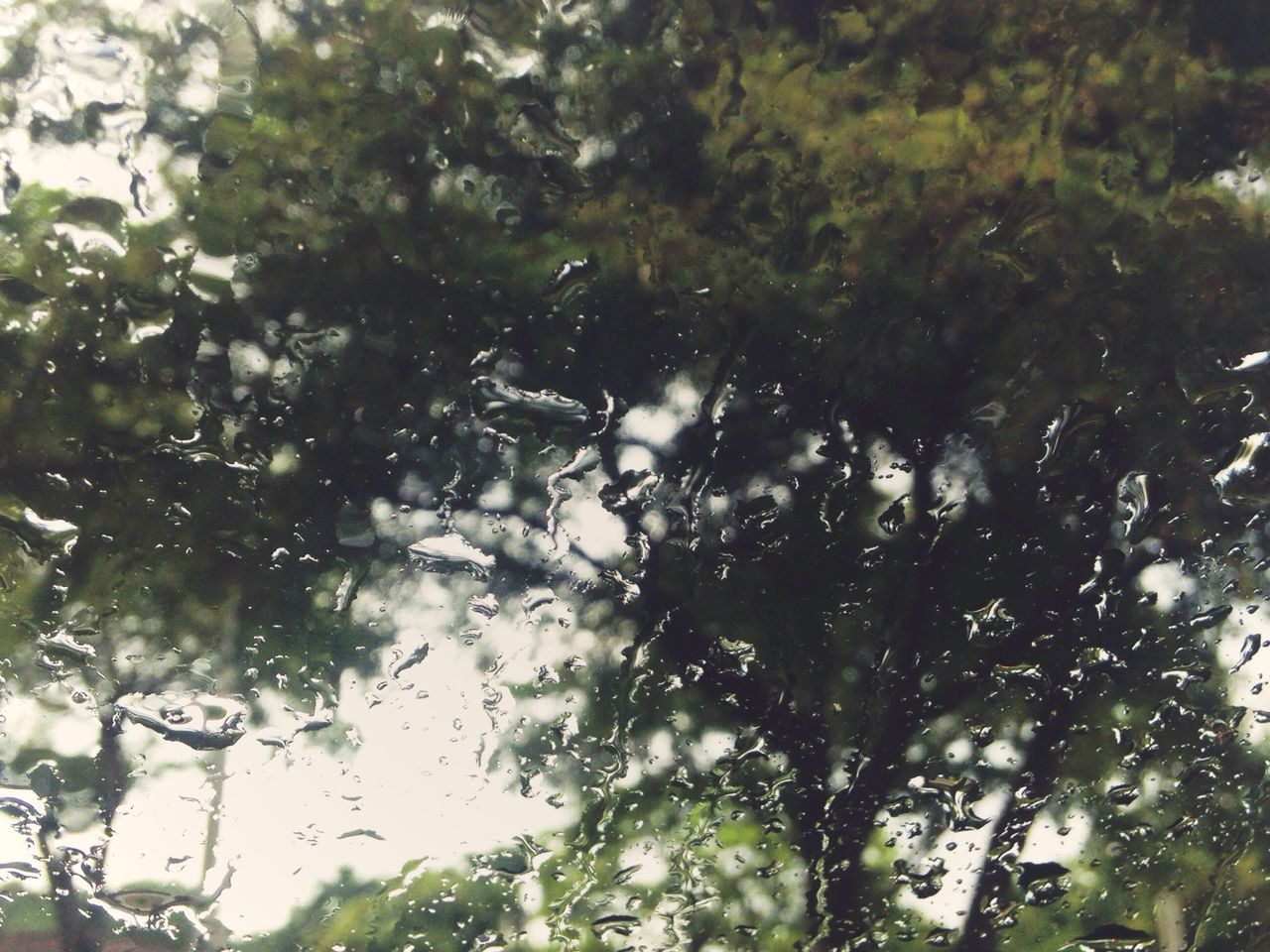 nature, tree, no people, day, growth, beauty in nature, outdoors, freshness, close-up, sky