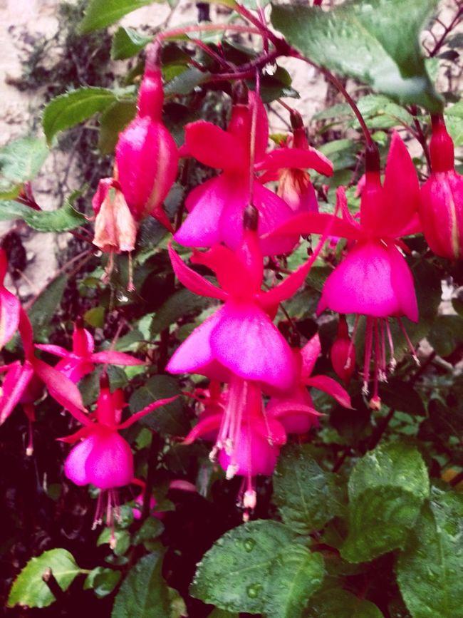 Beautiful Nature Garden Photography Flower Collection EyeEm Flower