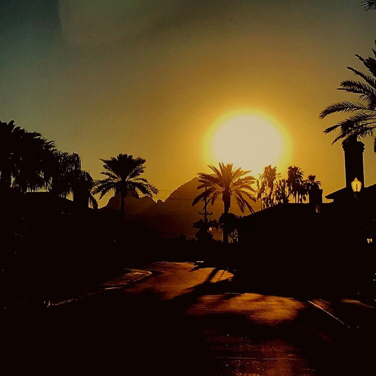 palm tree, tree, silhouette, sunset, tranquil scene, swimming pool, sun, tranquility, outdoors, beauty in nature, sky, scenics, sunlight, vacations, nature, no people, growth, sea, clear sky, day