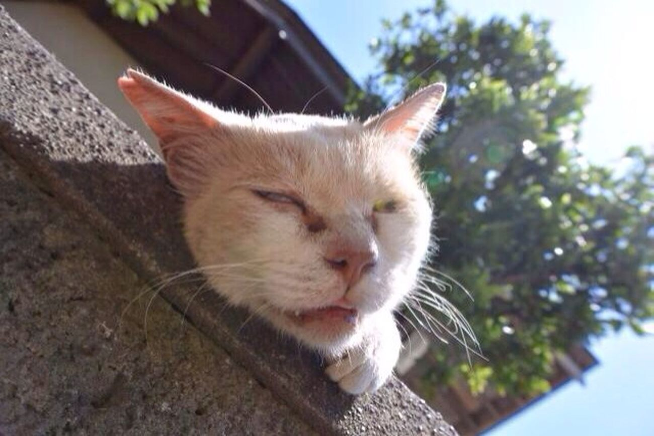 Single-lens Reflex 一眼 Cat Summer Nikon Summer Heat 猫 Stray Cat 夏バテ