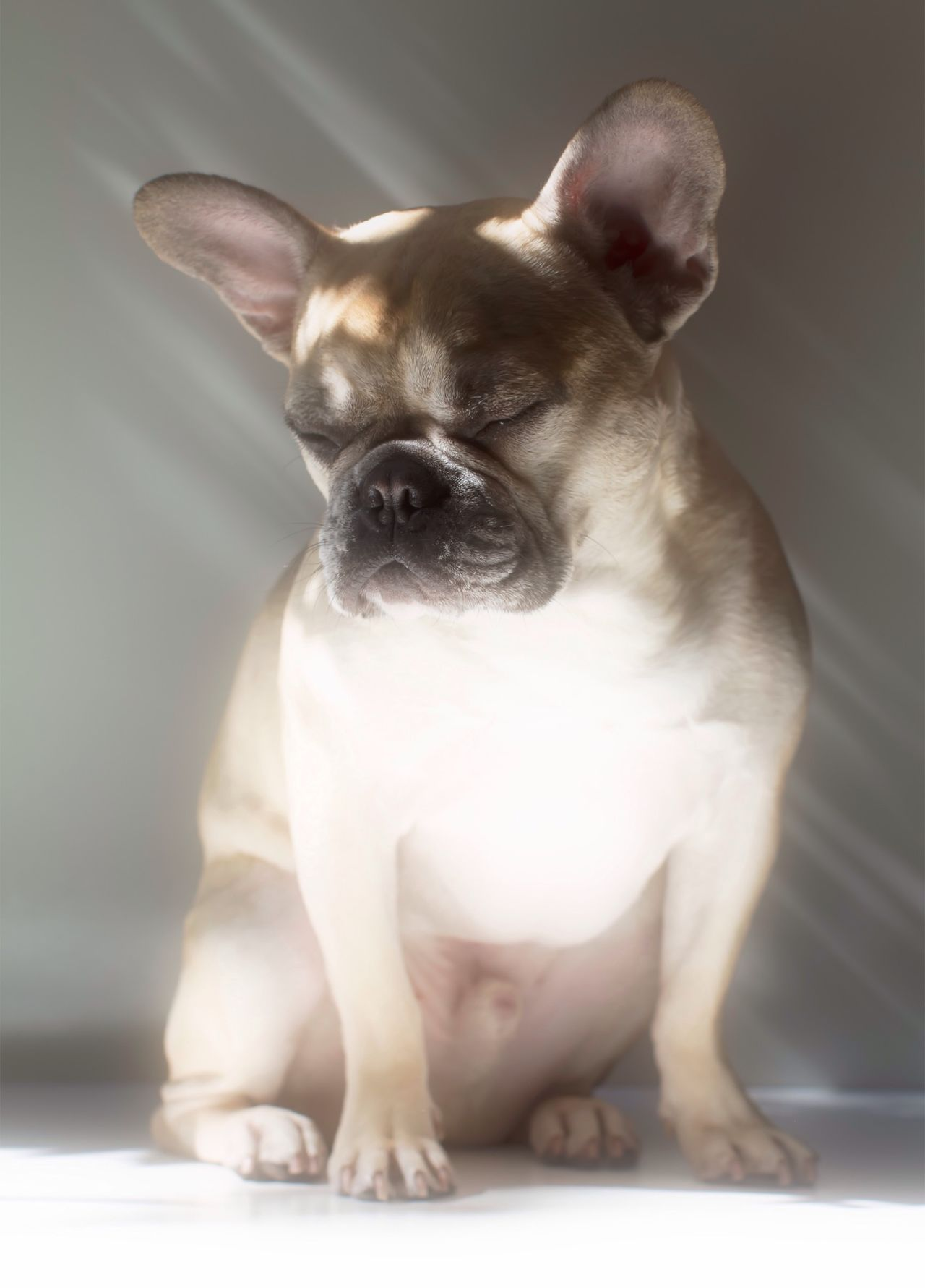 Beautiful stock photos of french bulldog, Animal Leg, Animal Mouth, Animal Themes, Day