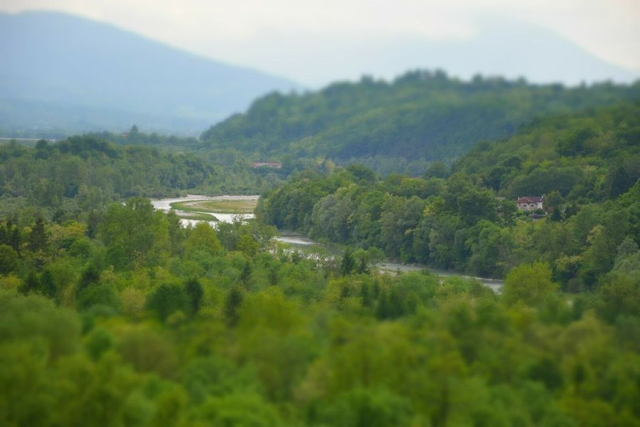 Tree Landscape Tranquil Scene Scenics Tranquility Mountain Beauty In Nature Solitude Forest Non-urban Scene Growth Nature Green Color Countryside Green Idyllic Remote Fiume Piave Selective Focus Plant