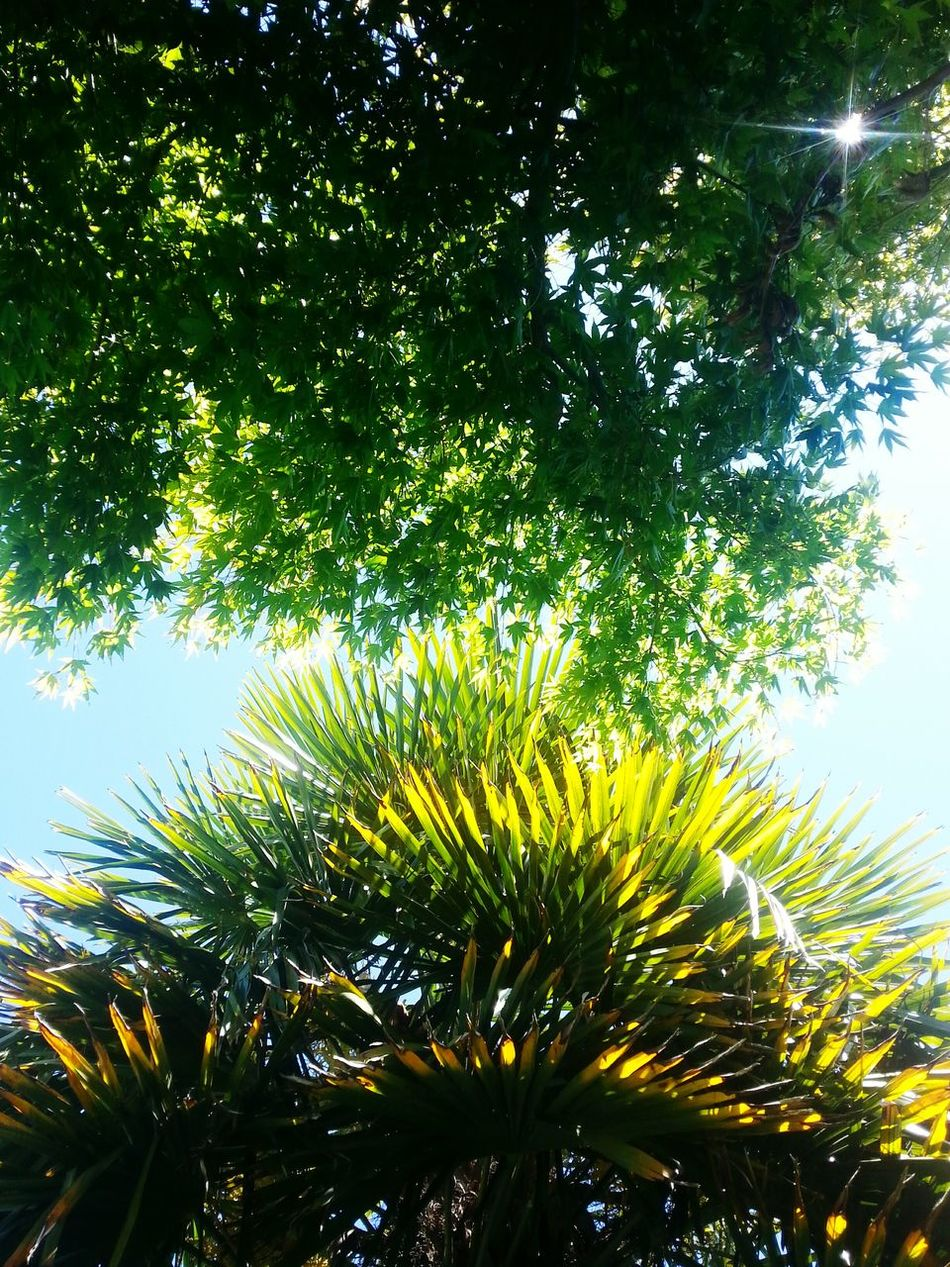 It's A Beautiful Day View From My Hammock My Secret Places In My Garden From My Point Of View Green Green Green!  And Blue Sky Open Edit