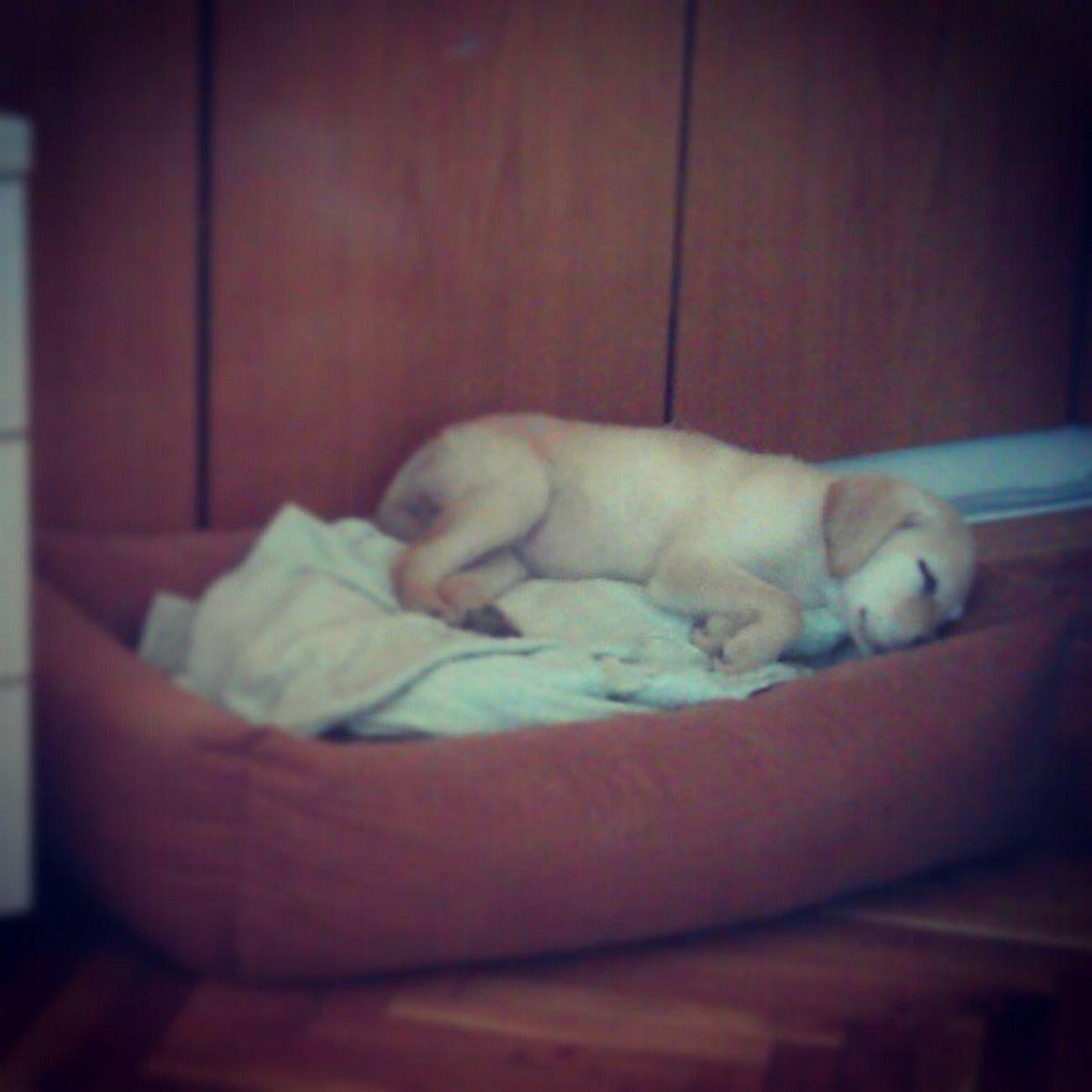 Uykucu şirin... :)