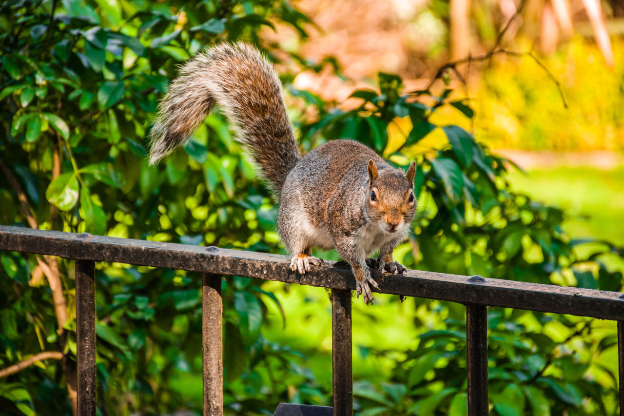 one animal, animal themes, mammal, animals in the wild, animal wildlife, focus on foreground, nature, squirrel, tree, green color, no people, leaf, outdoors, day, plant, branch, full length, beauty in nature, close-up