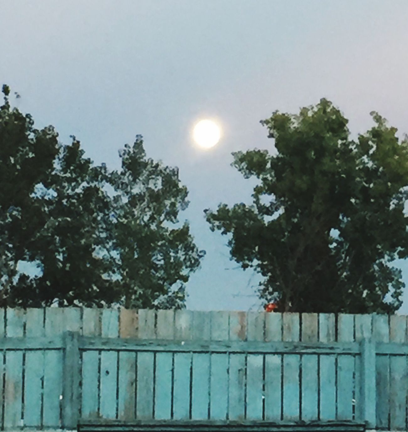 The night before the full moon Sky Nature Moon Light Outdoors Almost