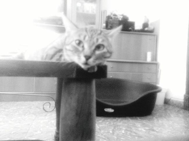 Amy. Una gatita muy presumida y buena. Instacatlove Gato Feliz Perros&gatos Gatita Linda Gatodeldia EyeEm Best Shots Taking Photos Street Gallery