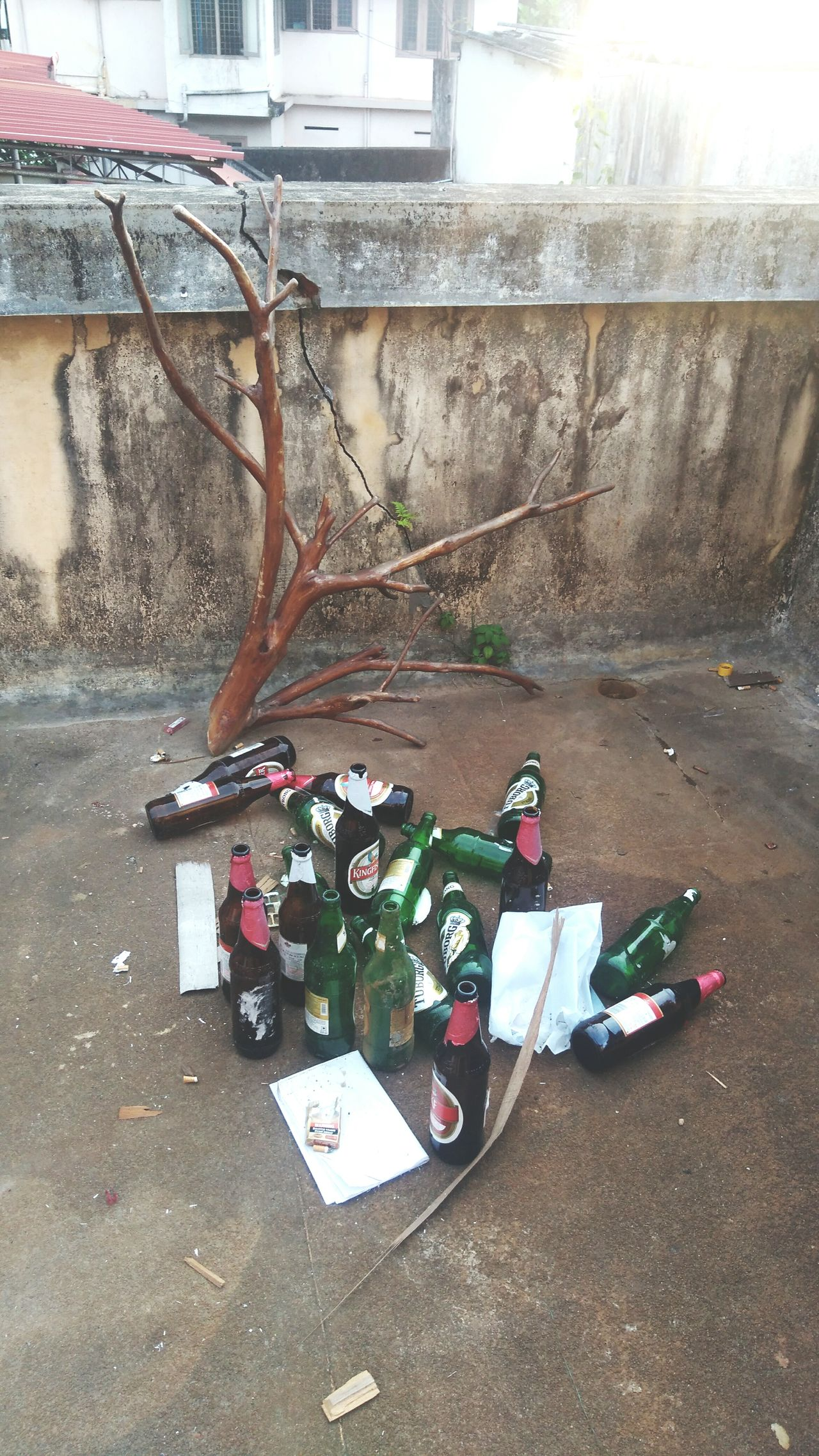 Branche of carboys nd coffin nails Carboy Coffin Nails No People Day Outdoors
