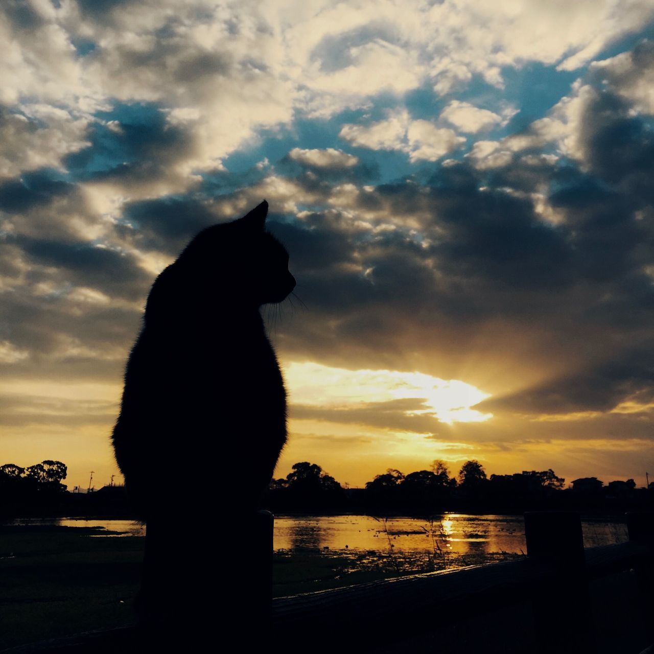 Cat Sunset Sky Clouds And Sky Silhouette One Animal Beauty In Nature Scenics Streetphotography Animal Themes Eyem Best Shots Light And Shadow Still Life Mobilephotography