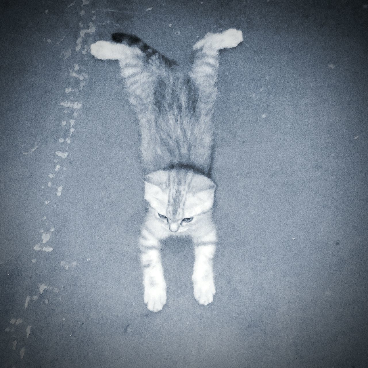 My cat Котэ 😻 . котик_развалилсяся Котик Санёк