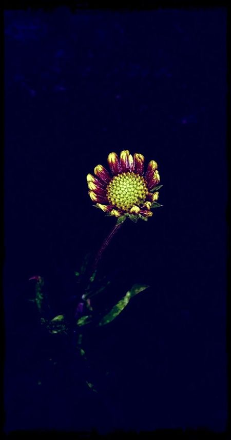 Yellow Flower Samsung Galaxy Note III Midnight In The Garden Of Good And Evil Petals Yellow Flowers