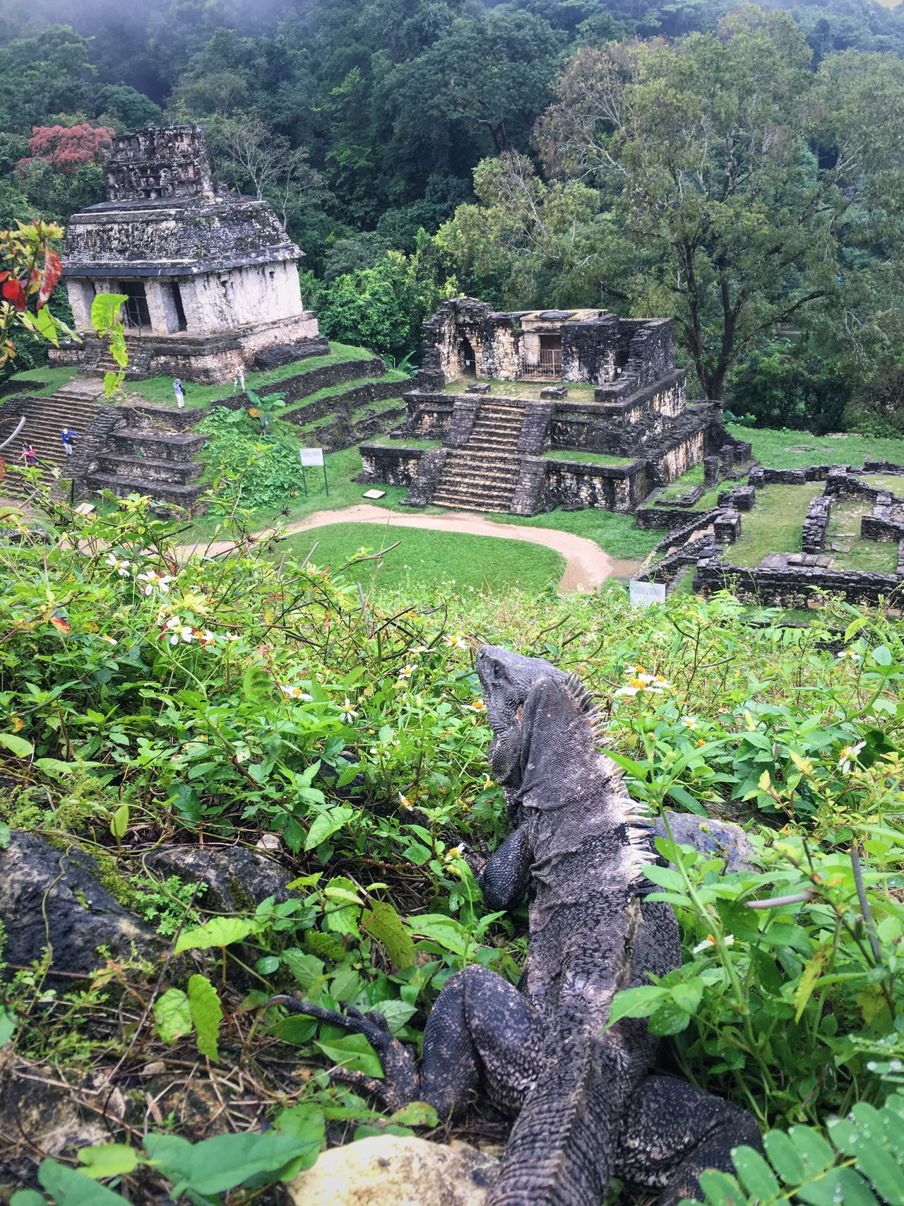 Showcase March Palenque First Eyeem Photo My Favorite Photo Leguan Ruins Ruins Architecture Best View First Row Camouflage