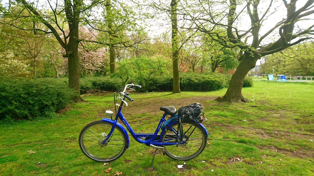 Tree Bicycle Green Color Grass Growth Transportation Day Nature Land Vehicle Mode Of Transport Tranquility Stationary Outdoors Field No People Branch Beauty In Nature Bicycle Rack Sky Amsterdamcity City Amsterdamlife Amsterdam Bike Good Times