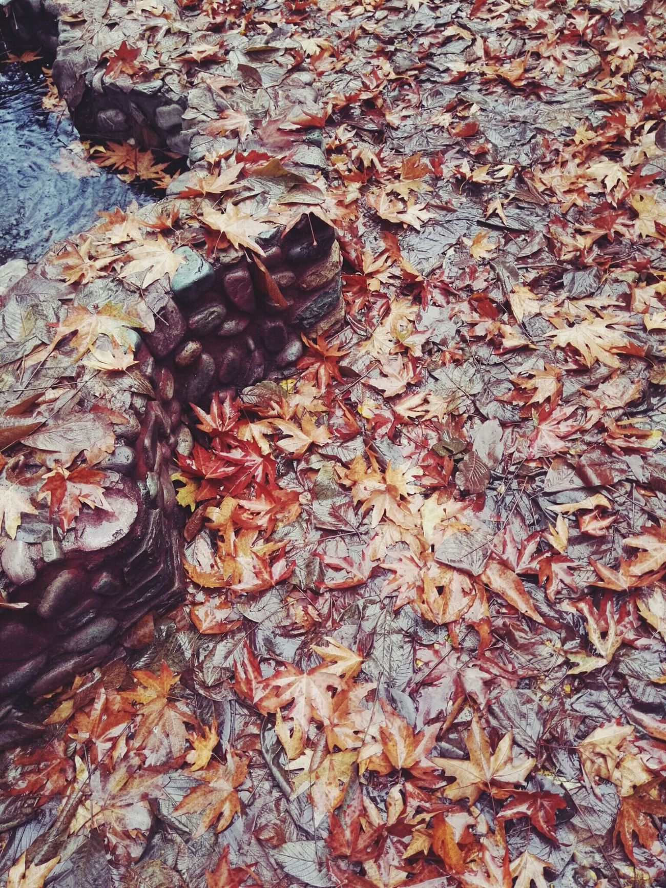 My Year My View No People Day Outdoors Nature Nature Beautiful Love Landscape Life Outdoor Carefree Beauty In Nature No Man Happy Colors Beauty Colorfull Autumn Autumn Colors Autumn🍁🍁🍁 Fall Leaves Animal Themes Close-up