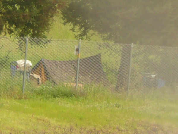 tent in San Jose near grove Ascetic Beauty In Nature Budget Traveller Camping Camping Out Camping Trip! Chain Link Fence Country Country Life Day Field Grass Growth Homeless People Migrants Nature No People Outdoors Poverty Roughing It Squatting Tent Tree Vacation Vagrancy