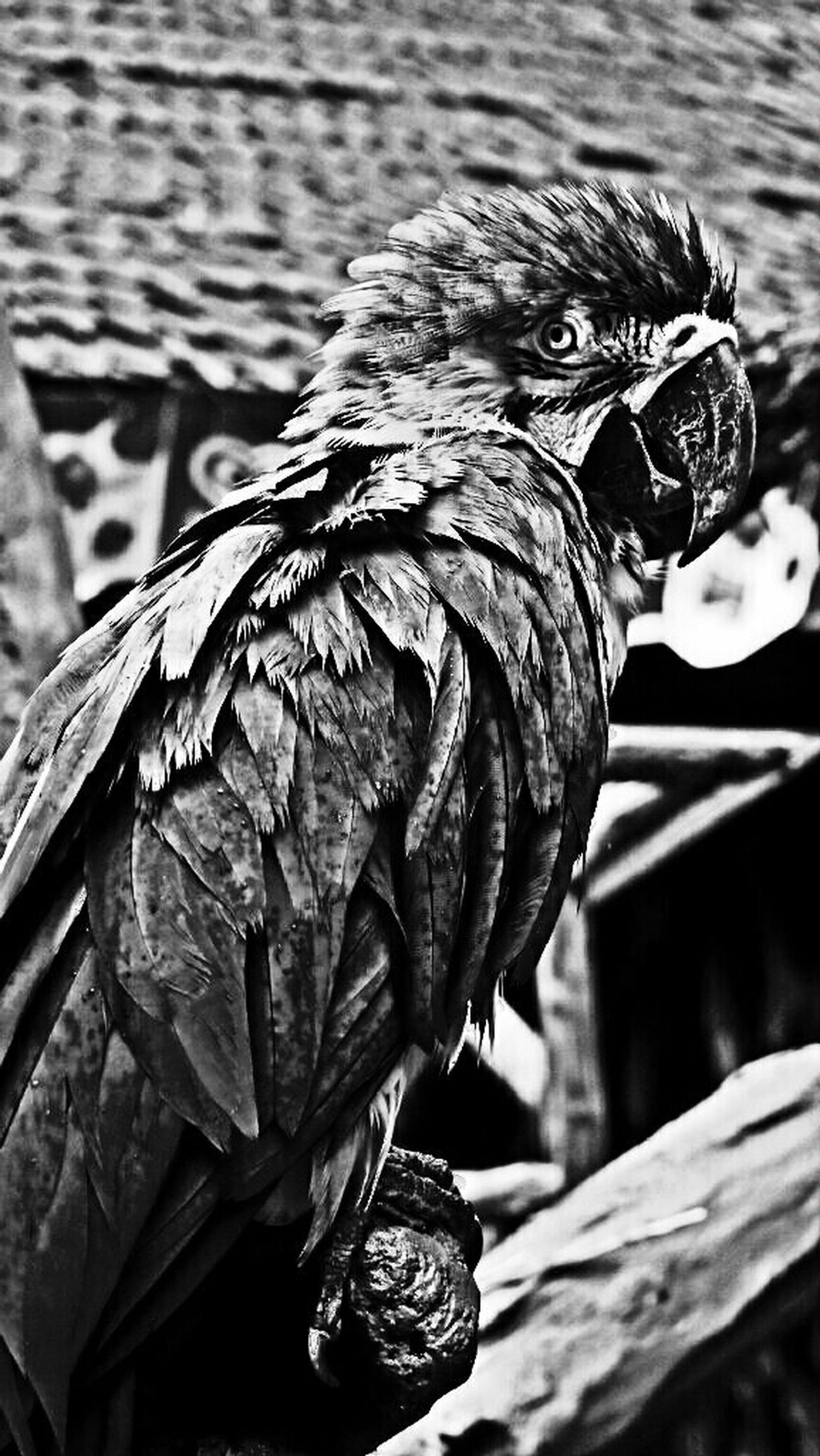 What are you looking at? Animal Birds Eye4photography  Blackandwhite