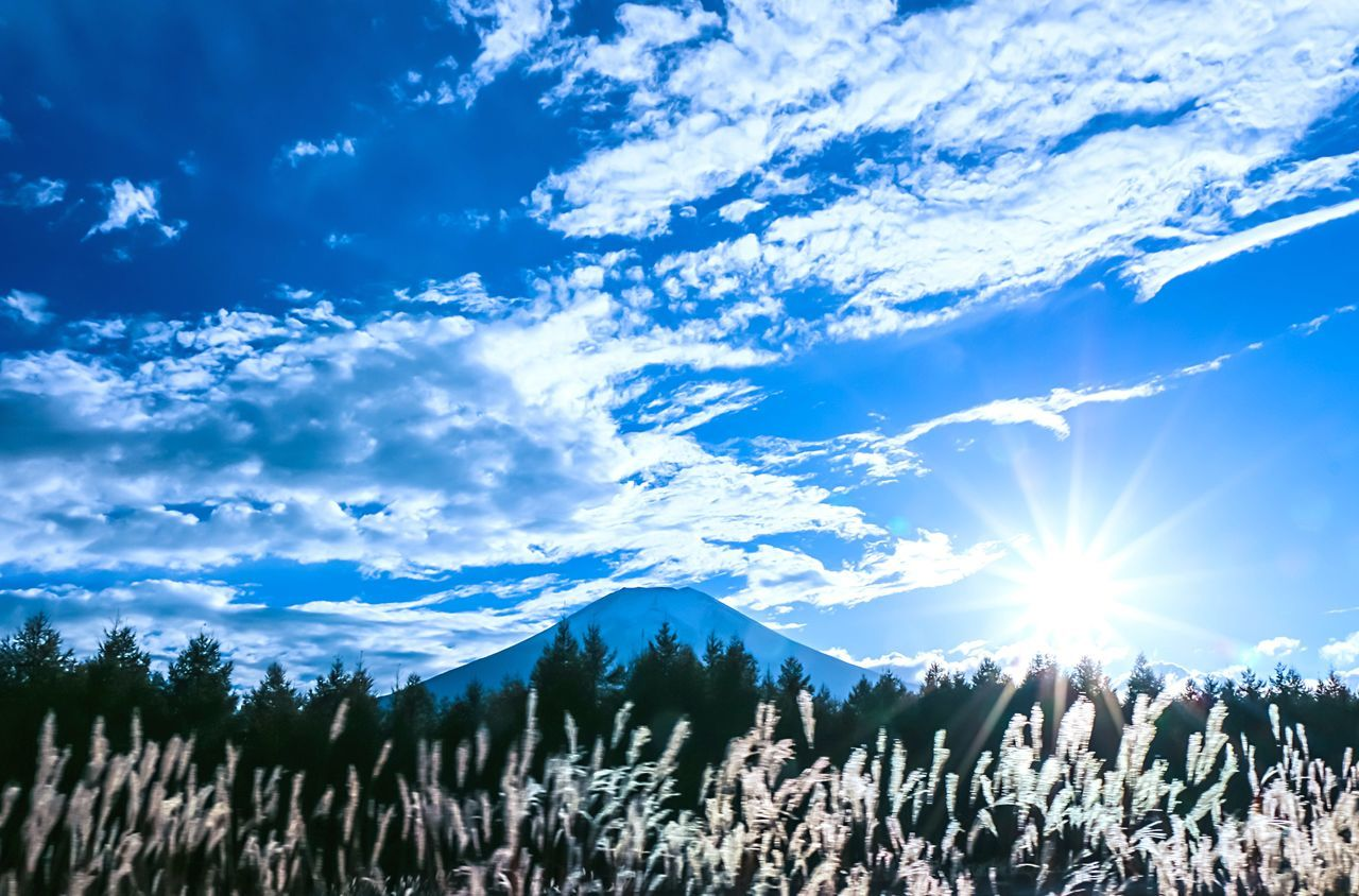 A Series Of Fuji Mountain's Picture -20 EyeEm Best Edits Eye Em Nature Lover Backlighting Bulrushes In Backlighting Natural Beauty Mt.Fuji Autumn Colors Autumn Fujimountain Fuji Mountain
