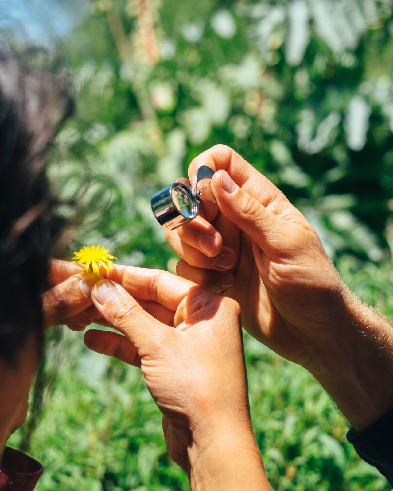 Human Hand Holding Real People Two People Human Body Part Smart Phone Outdoors Nature Rural Poetry Beauty In Nature Magnifying Glass Curiosity Learning Botany Day Focus On Foreground Togetherness Men Leisure Activity Close-up Lifestyles Women Nature