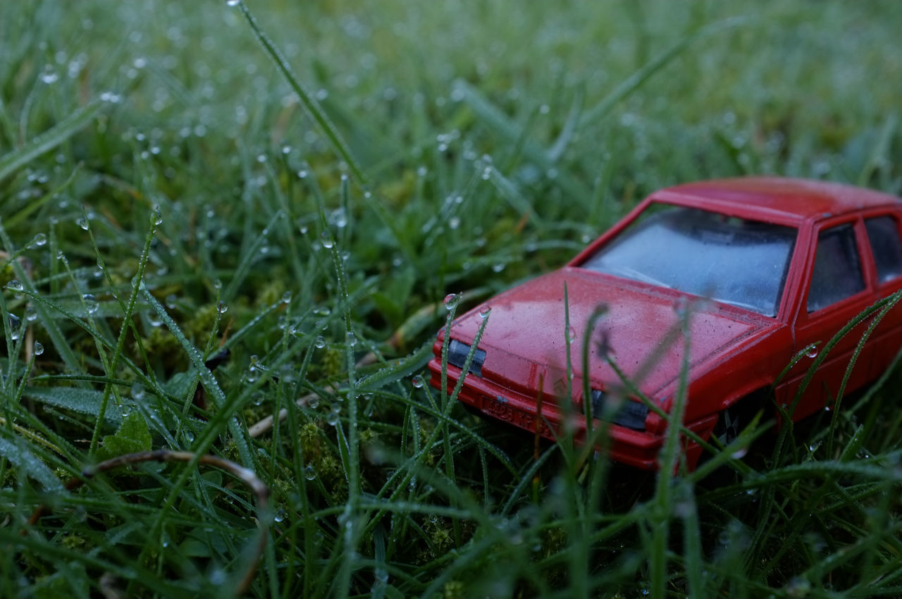 grass, field, red, no people, green color, nature, growth, day, close-up, plant, outdoors
