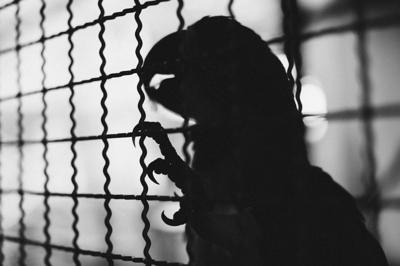 Blackandwhite Cage Caged Day Domestic Animals Focus On Foreground Fresh On Eyeem  Full Frame Macaw Macaw Parrot Monochrome Outline Parrot Selective Focus Silhouette Silhouette_collection Unknown Gender