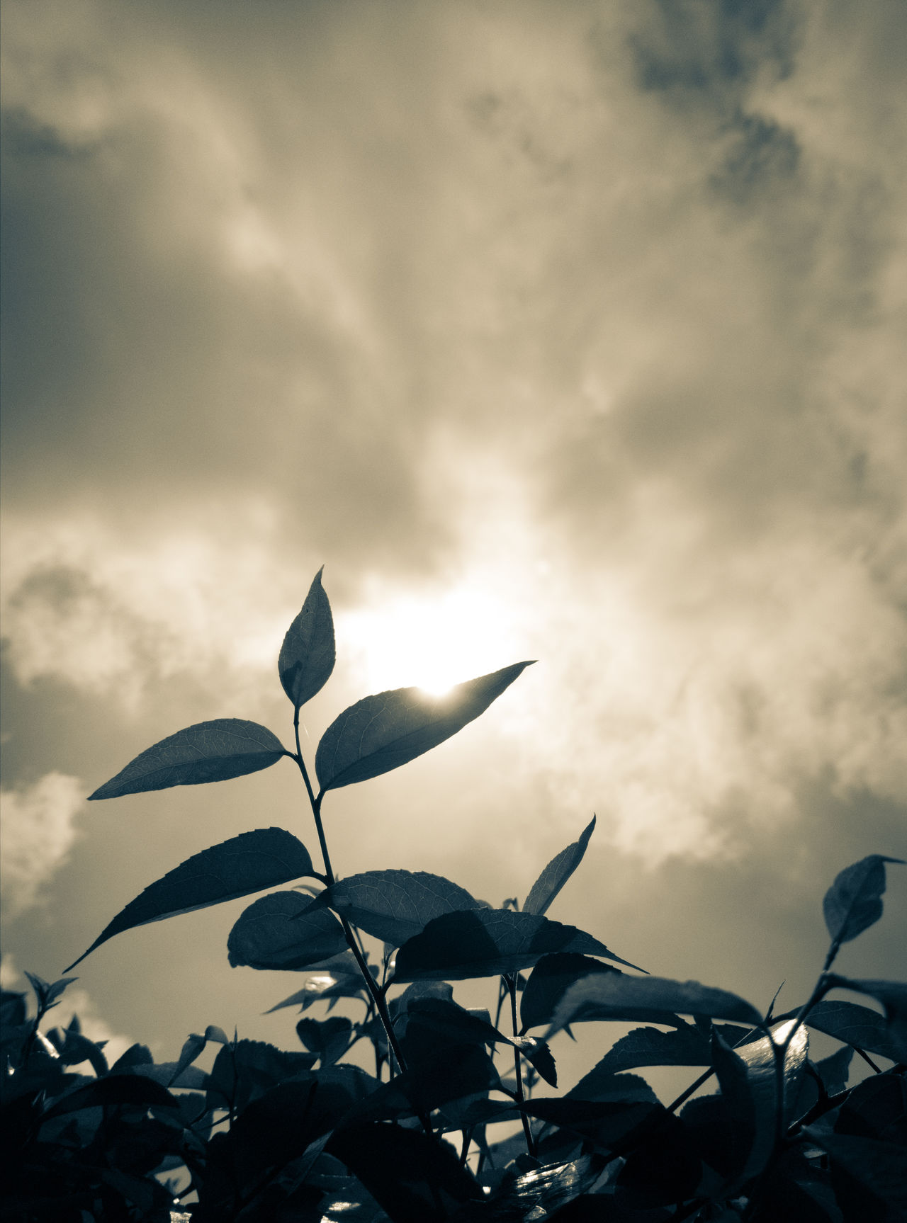 Leaf Cloud - Sky Plant No People Nature Sky Growth Day Fragility Outdoors Sunbeam Flower Close-up Tree Beauty In Nature
