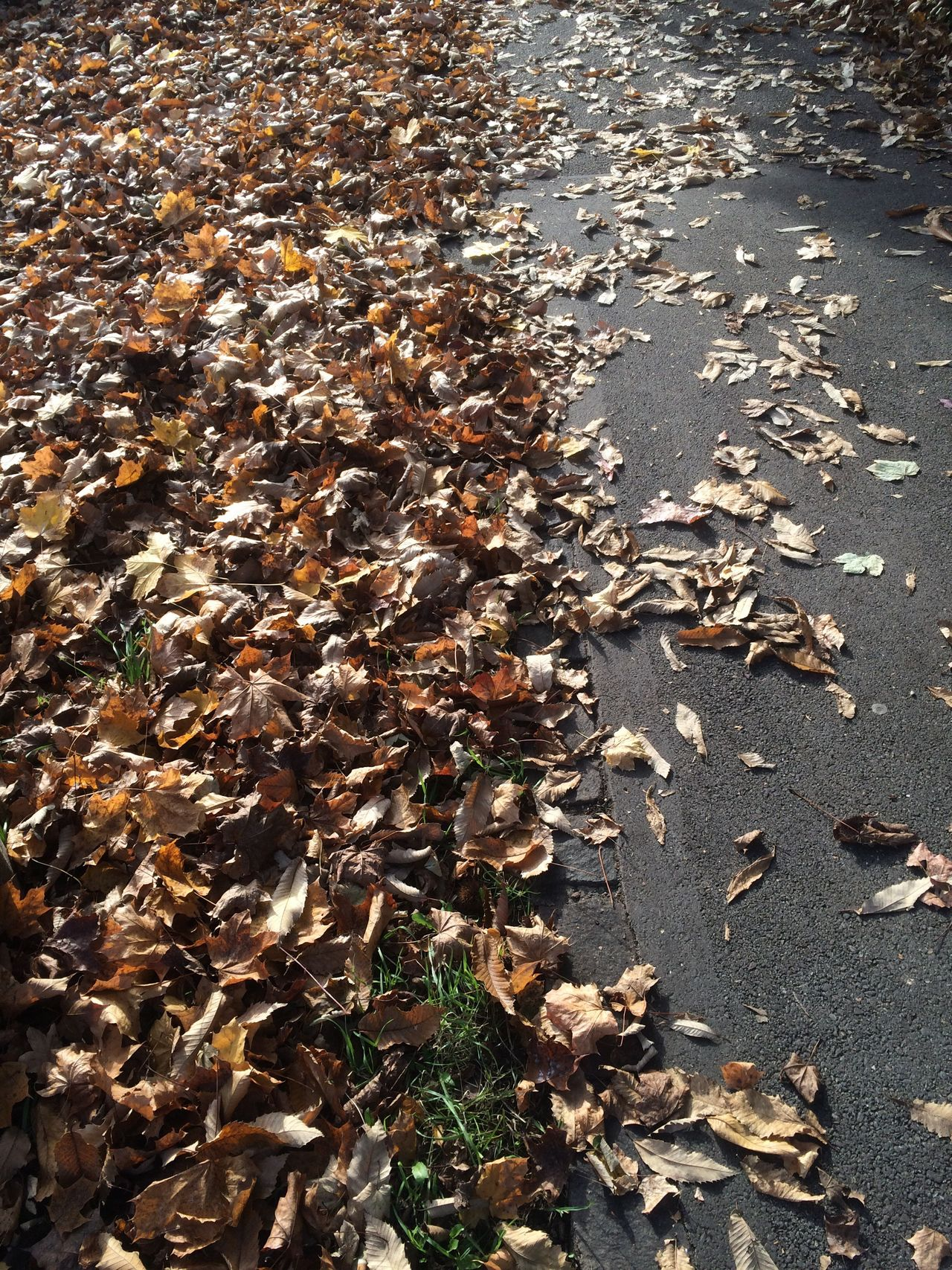 Leafs On The Ground Autumn High Angle View Nature No People Outdoors Day Beauty In Nature