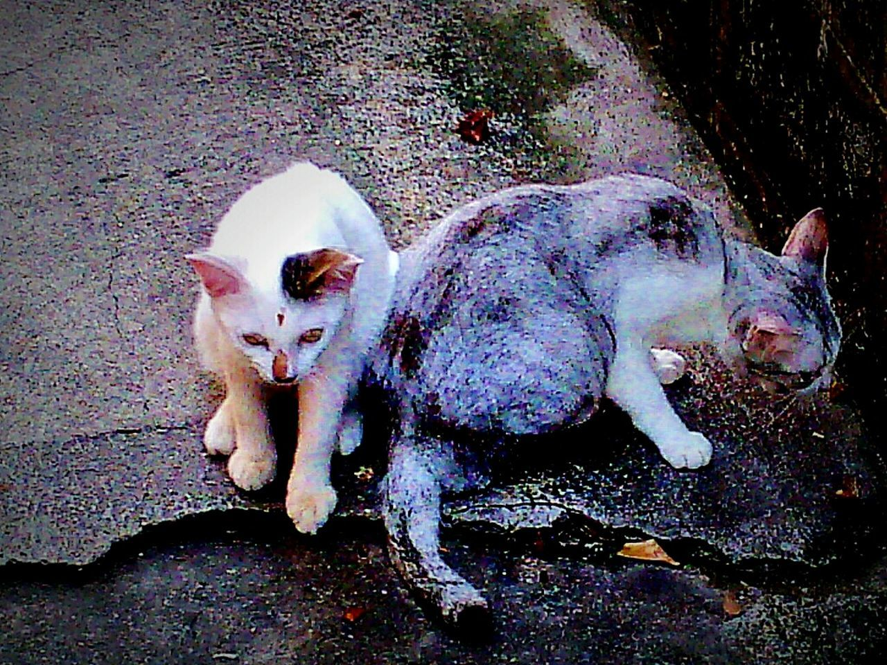 Cats, my cats, Pet 💜, Hanging Out Open Edit In Eyeem. Taking Photos. .
