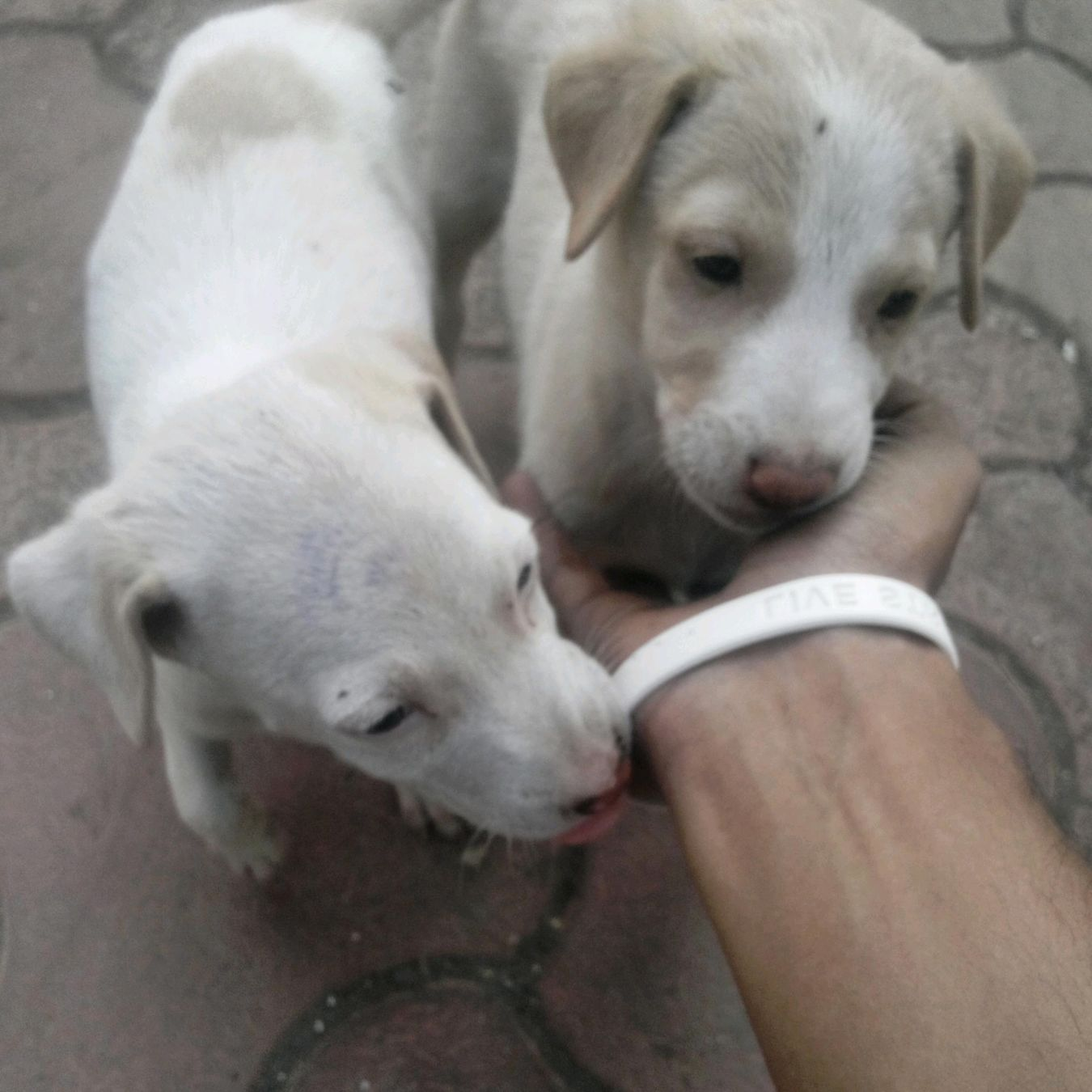 Whoever said u cant buy happiness forgot about the puppies:)