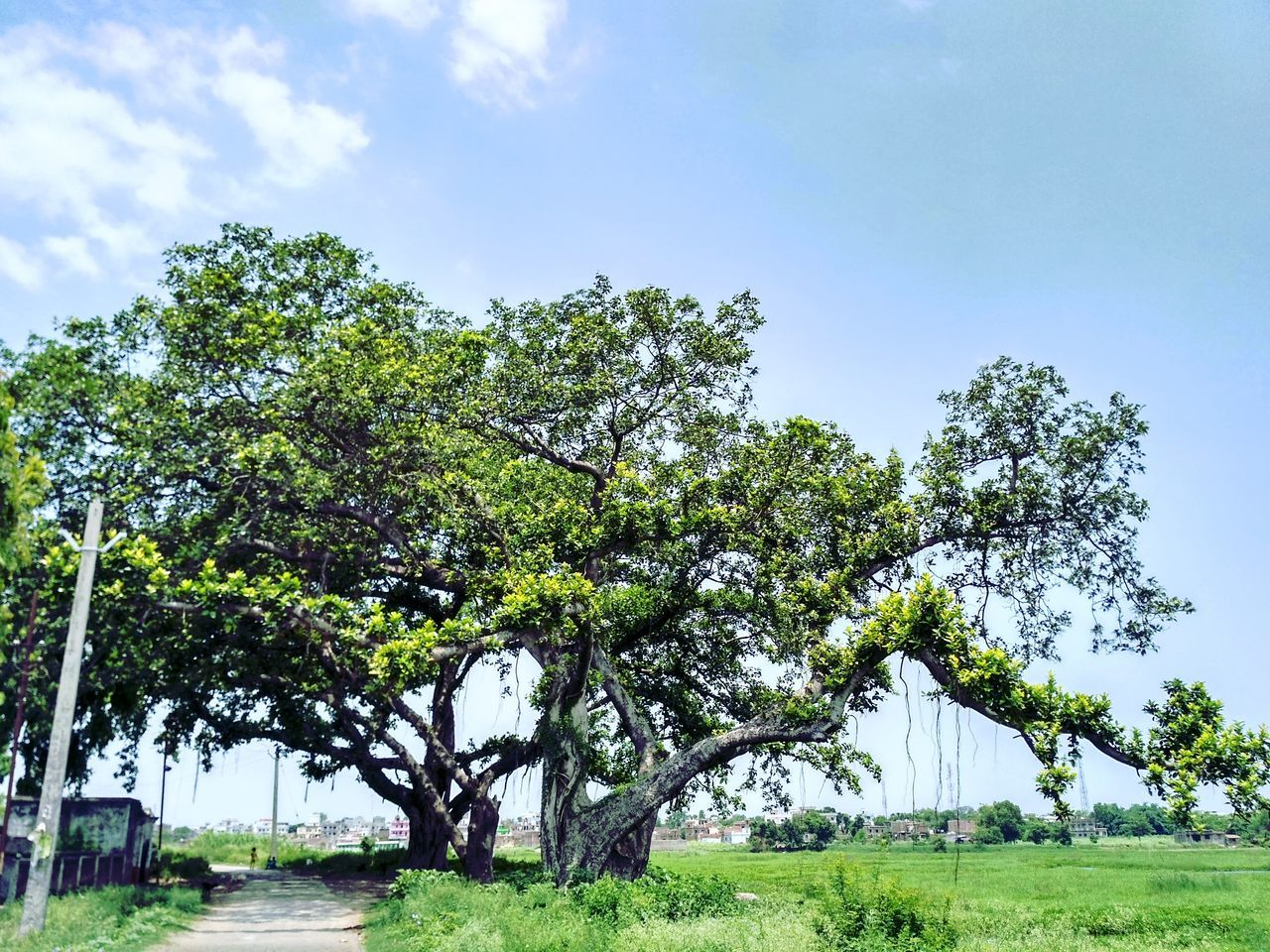 Tree Outdoors Nature Day No People Sky Beauty In Nature Green Color Grass Growth Rural Scene