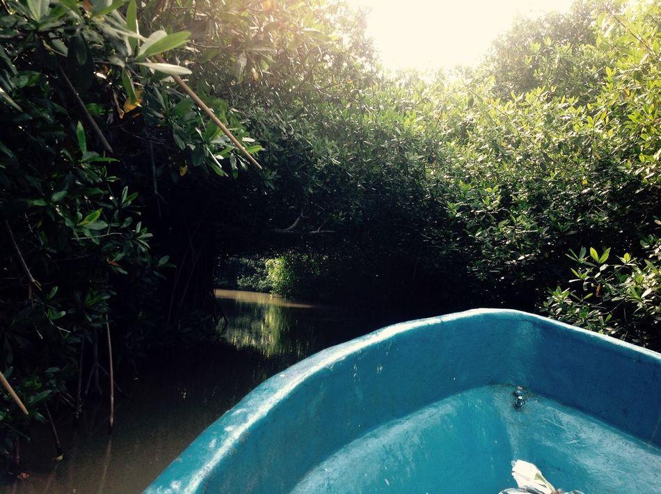 Estero Palo Verde Cuyutlan