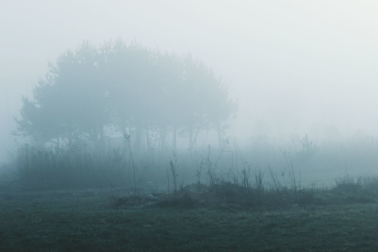 Trees And Plants Growing On Field During Foggy Weather