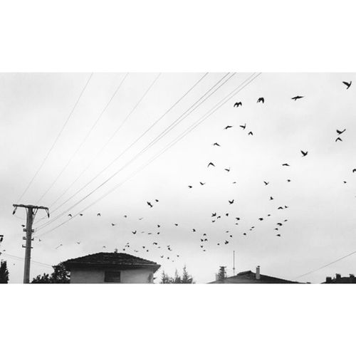 like a fly birds .. Blackandwhite