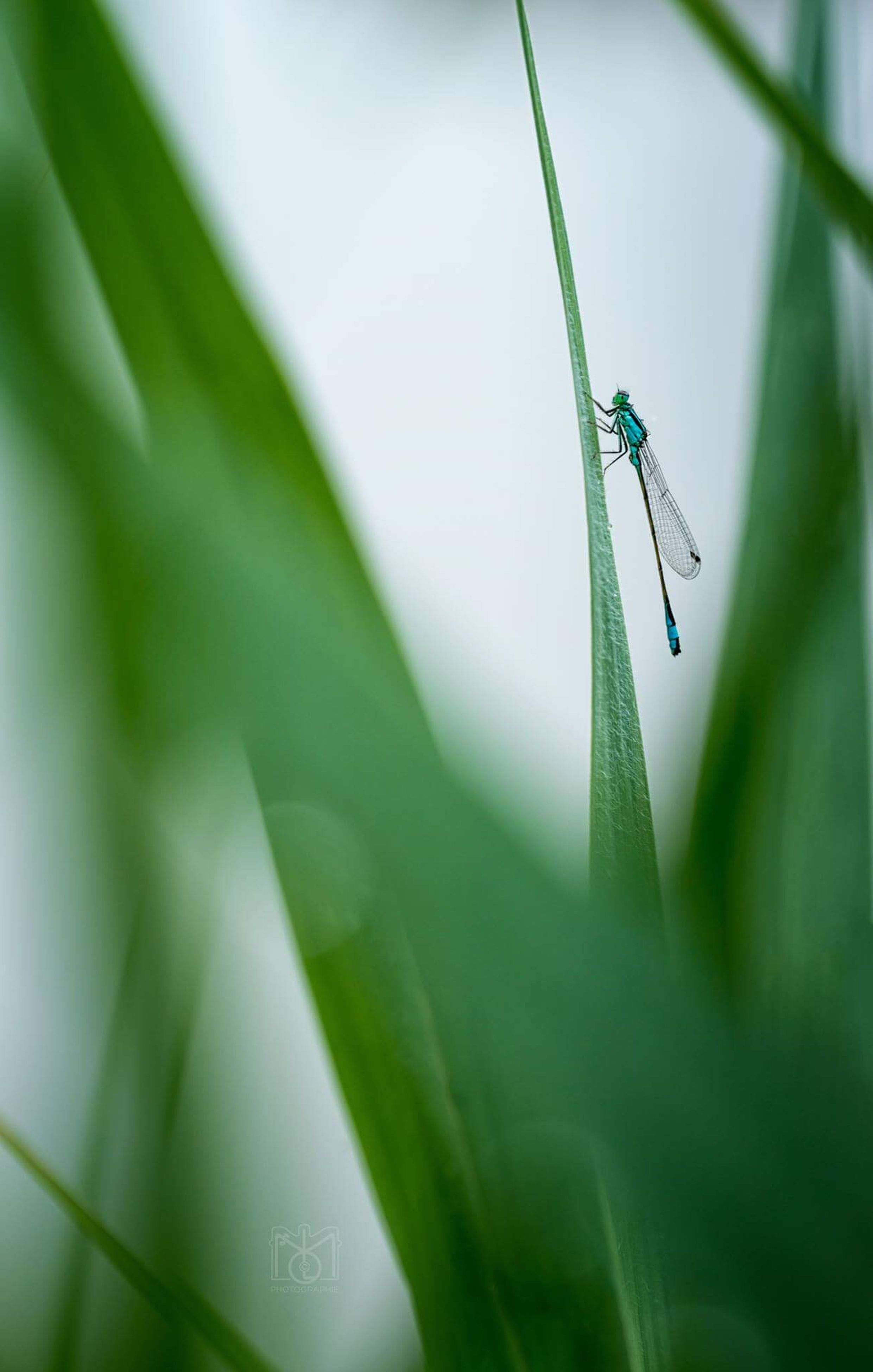one animal, green color, animal themes, animals in the wild, insect, animal wildlife, leaf, close-up, no people, plant, day, damselfly, nature, outdoors, beauty in nature, grasshopper