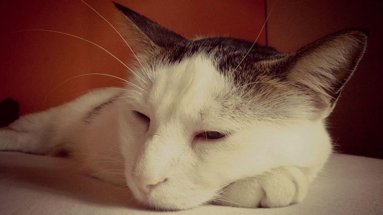 Brandy Animal Cat Sleep Animal Love Animal Photography Beautiful Animals  FUNNY ANIMALS Animal Face Cat Lovers