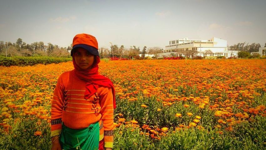 Orange Color Crop  One Person Adult Agriculture Flower Portrait Plant Only Women Looking At Camera Growth Adults Only Business Finance And Industry Outdoors Sky People One Woman Only Women Rural Scene Poppy