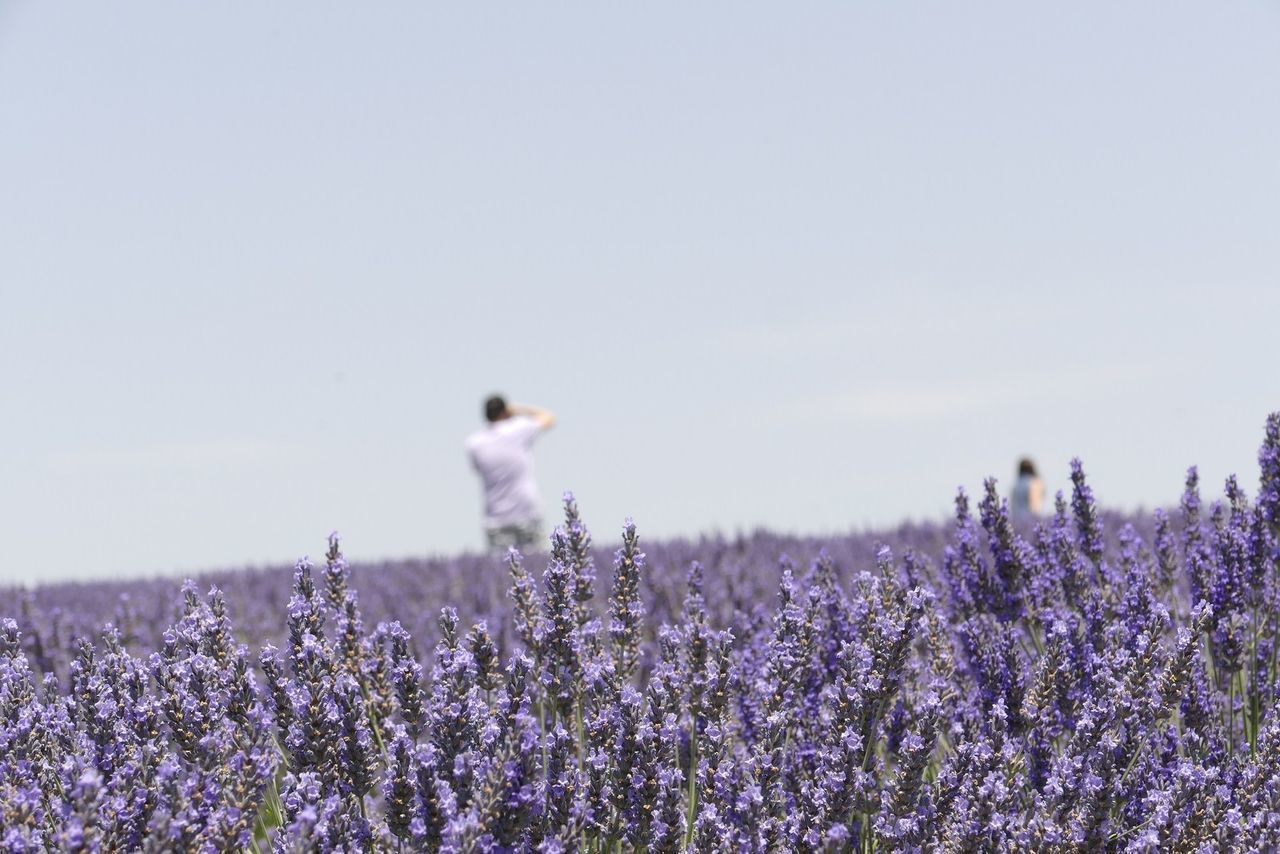 Beautiful stock photos of france, , Abundance, Agriculture, Beauty In Nature