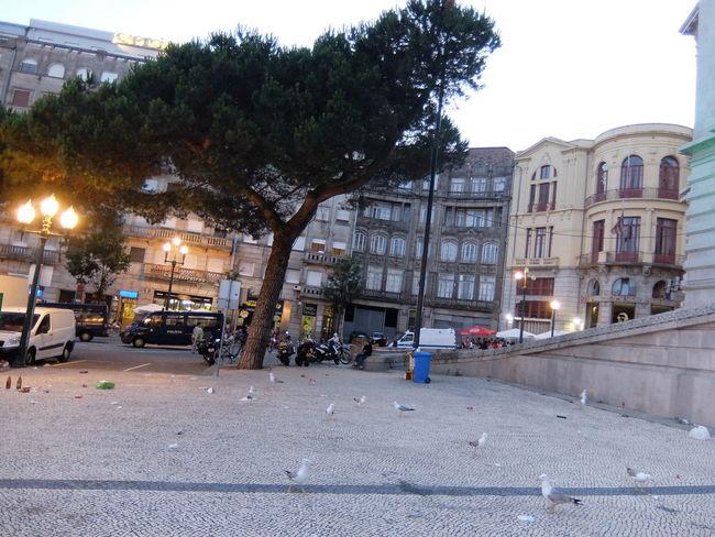 Birds City City Life Euro 2016 Garbage Green & Red Porto Portugal