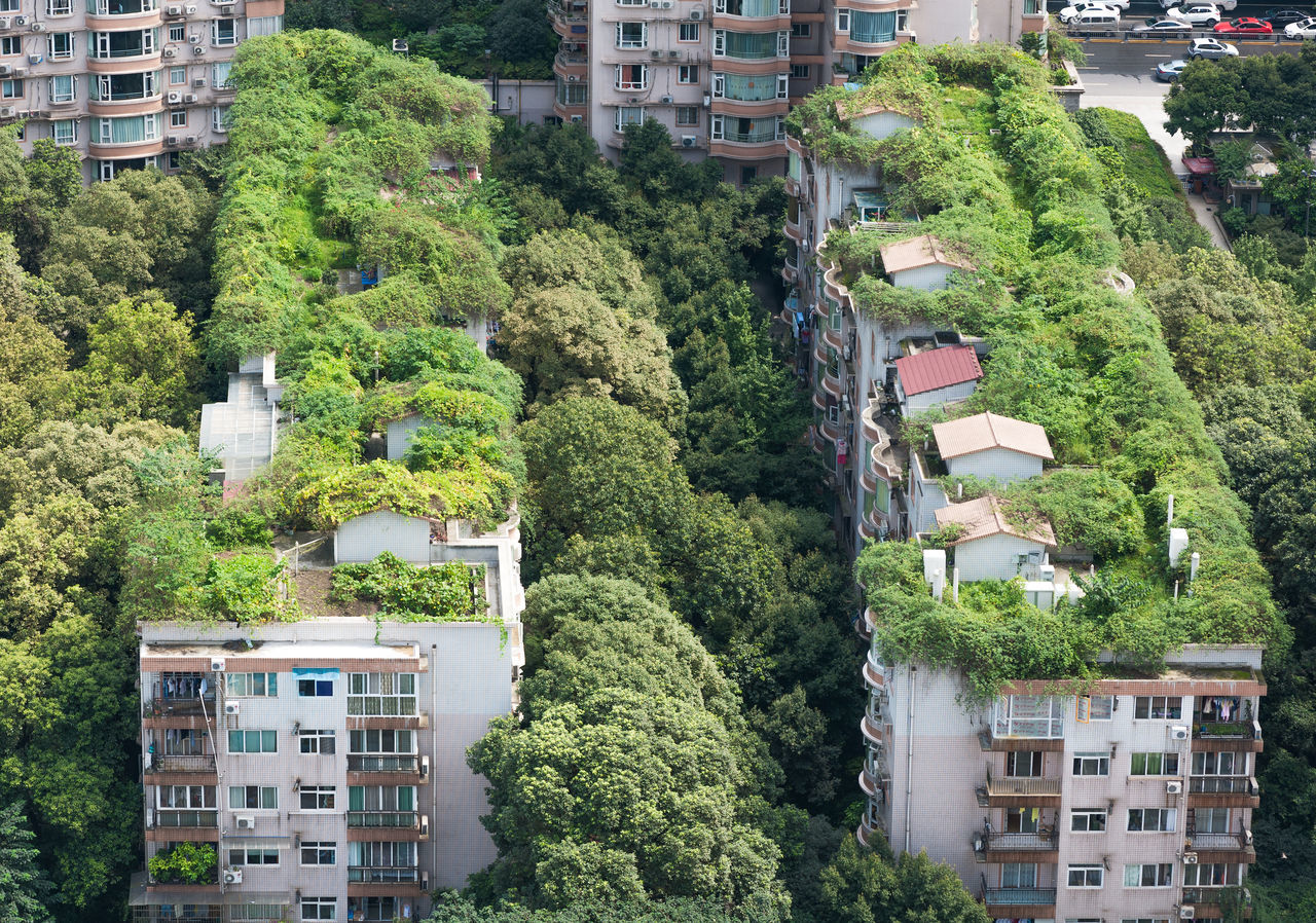 Residential buildings surrounded by trees and vegetation in Chengdu, Sichuan, China Adapted to the City Architecture buidlings building exterior built structure Chengdu City Cityscape day Green color Growth no people outdoors residential building Tree vegetation